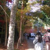 ひんここ祭り会場内歩道の様子02